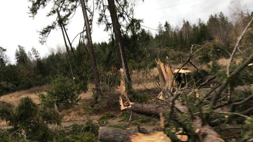 Der Sturm hat mehrere Bäume umgestürzt, die auf die B17 fielen. Die Straße war zwischen Landsberg und Unterdießen zeitweise gesperrt.