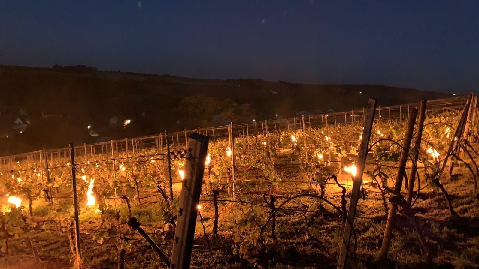 Mit Kerzen in Eimern haben Winzer ihre Weinstöcke vor dem Frost geschützt.
