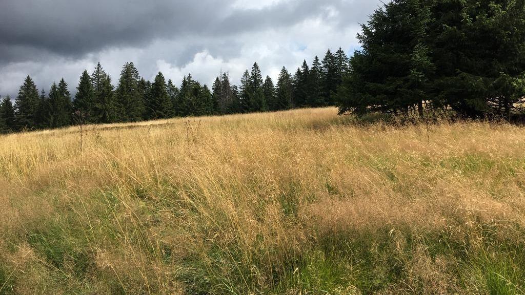 Deutsche und tschechische Wissenschaftler erforschen bei einem Projekt im Nationalpark Bayerischer Wald die Flora des Böhmerwaldes