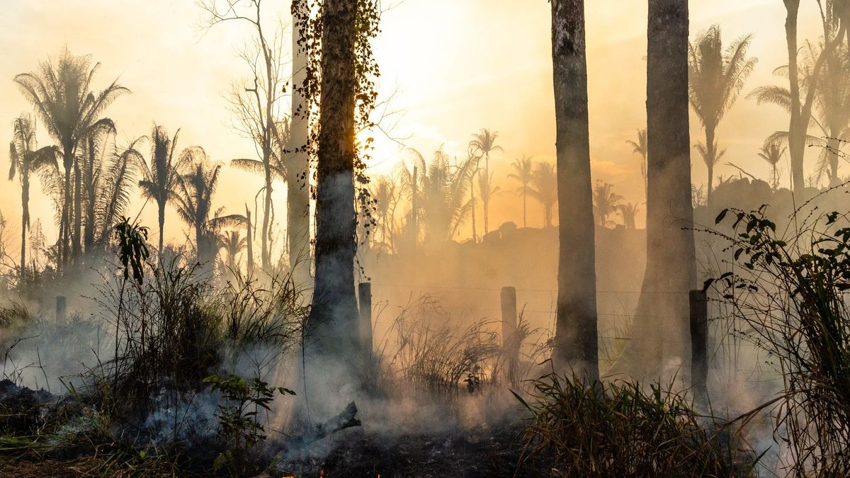 Brandrodung im Amazonas-Gebiet in Brasilien (Symbolbild)
