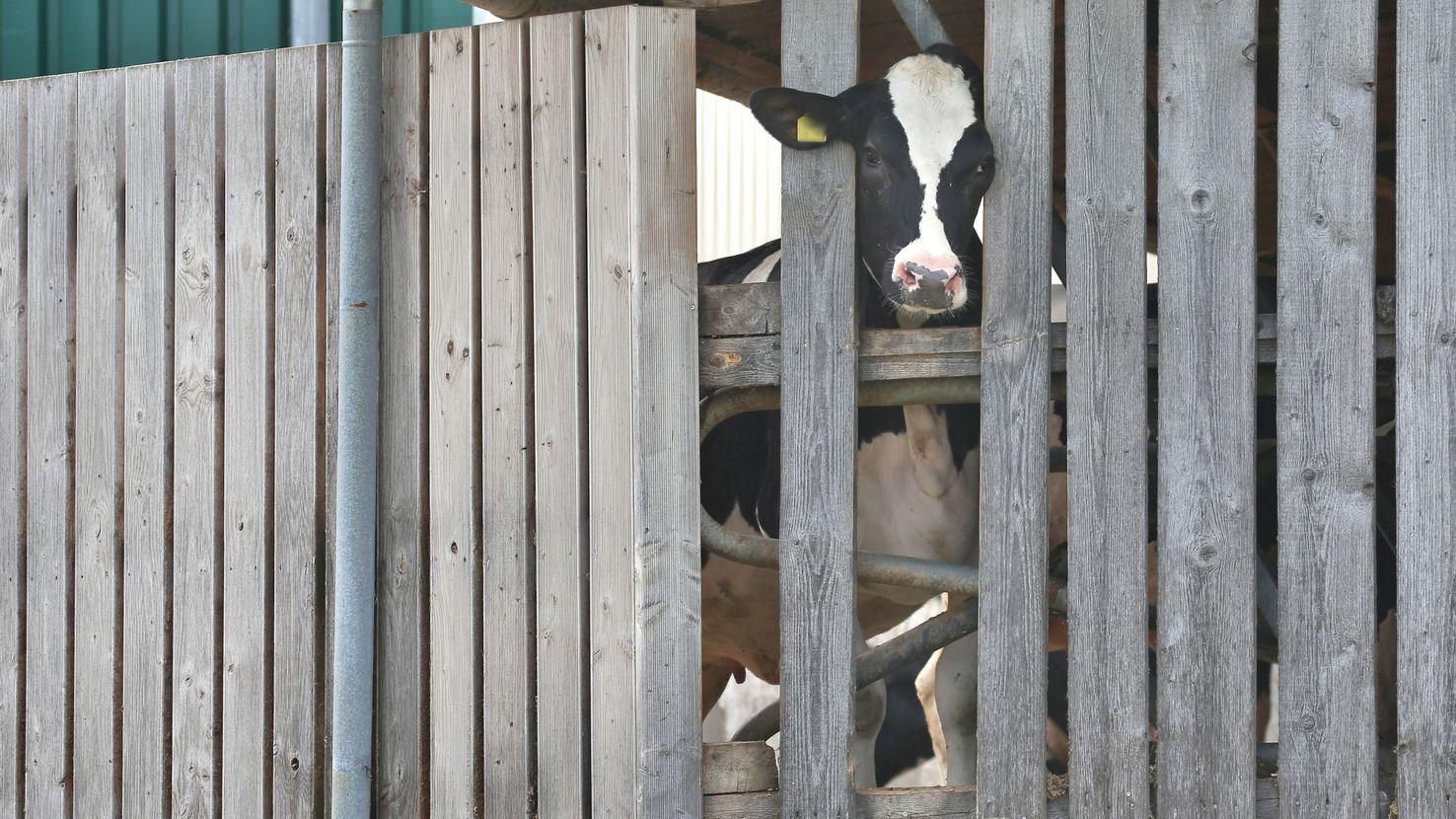 Die Staatsanwaltschaft Memmingen ermittelt gegen den Betreiber eines Hofes in Bad Grönenbach wegen Tierquälerei.