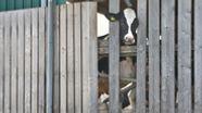 Die Staatsanwaltschaft Memmingen ermittelt gegen den Betreiber eines Hofes in Bad Grönenbach wegen Tierquälerei. | Bild:dpa-Bildfunk