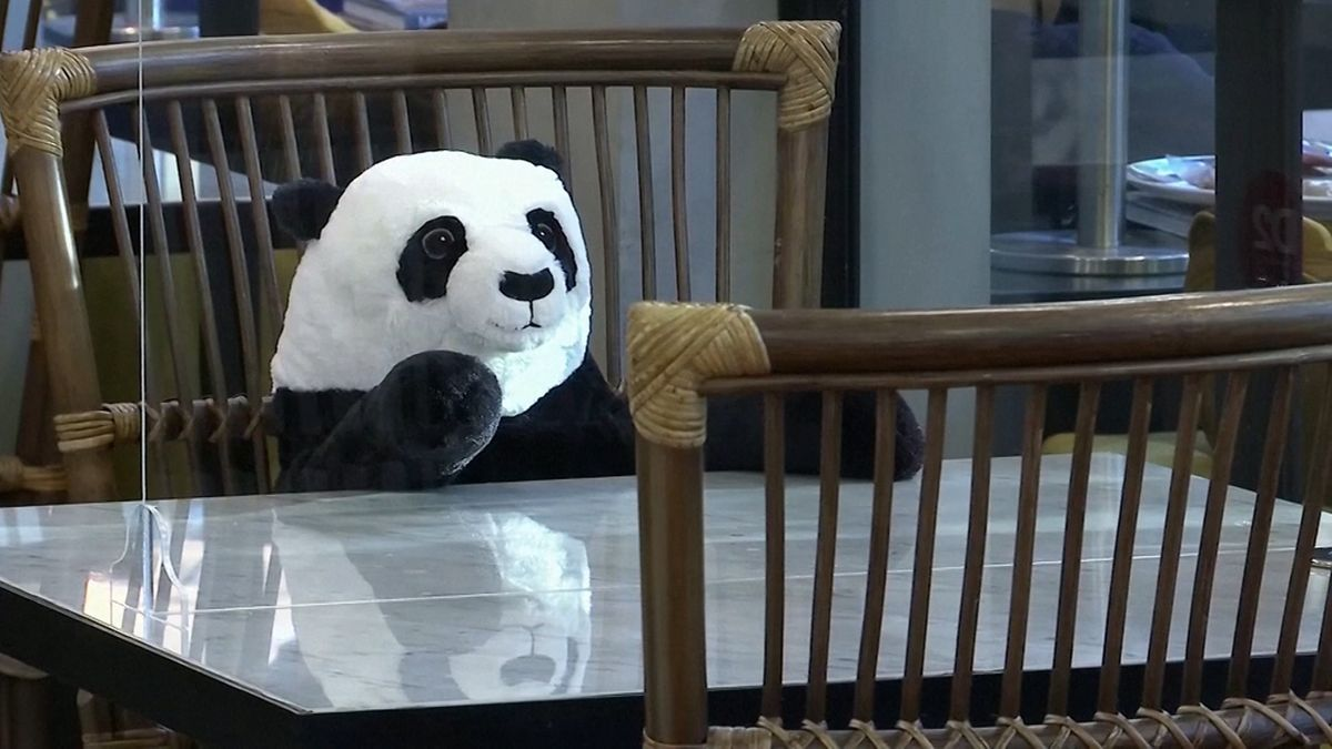 Kuschel-Panda als Restaurant-Begleitung