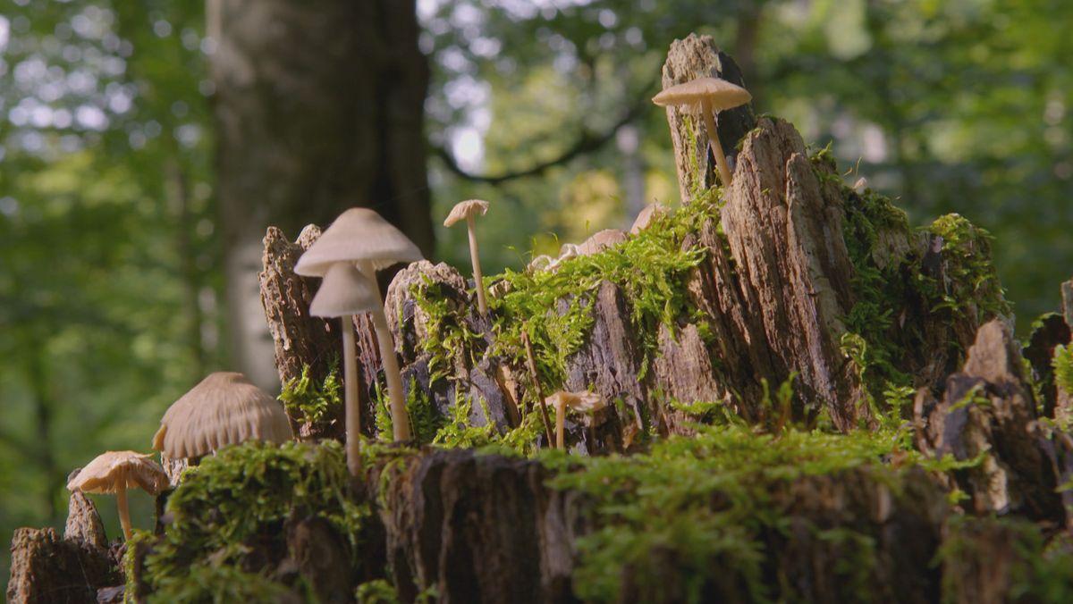 Eine Impression aus dem Steigerwald