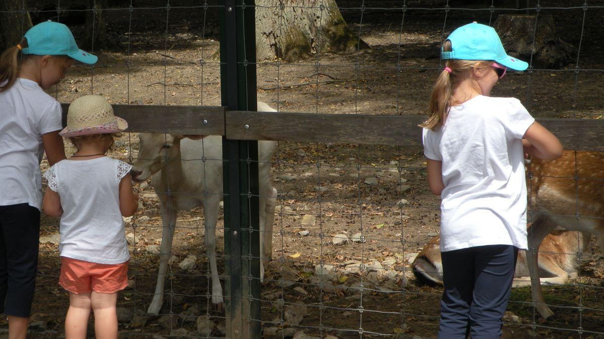 Kinder füttern Damwild im Wildpark Schweinfurt