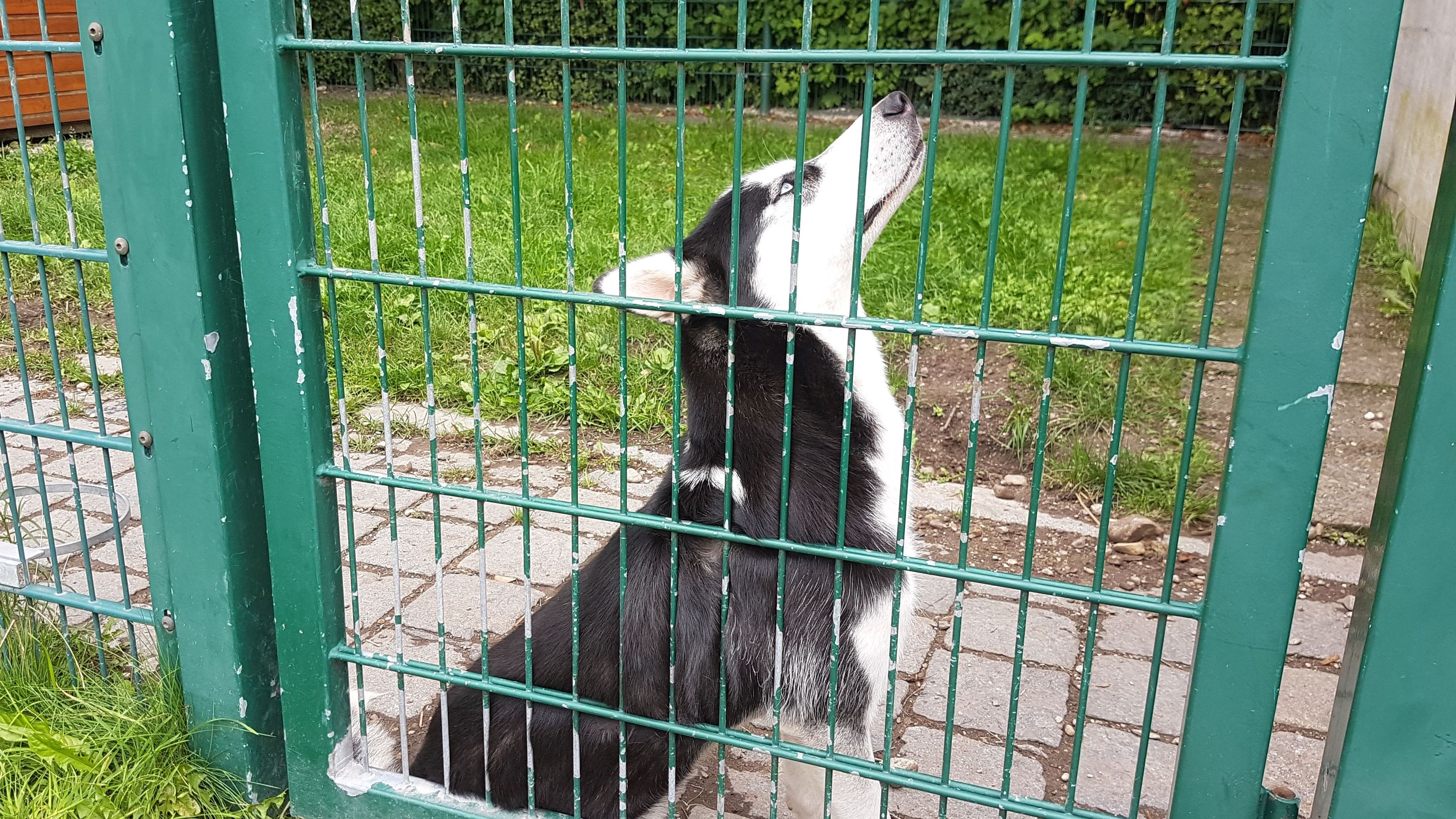 Hund im Münchner Tierheim wartet auf neues Zuhause