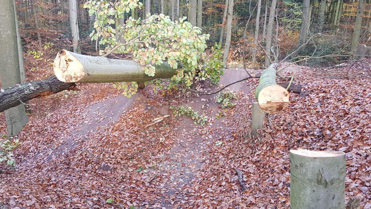 Zwei gefällte Bäume liegen auf dem Boden, dazwischen ist ein Mountainbikeweg zu erkennen.