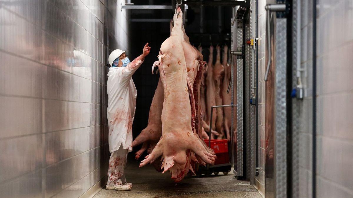 Schweine hängen in einem Schlachthof am Haken. (Symbolbild)