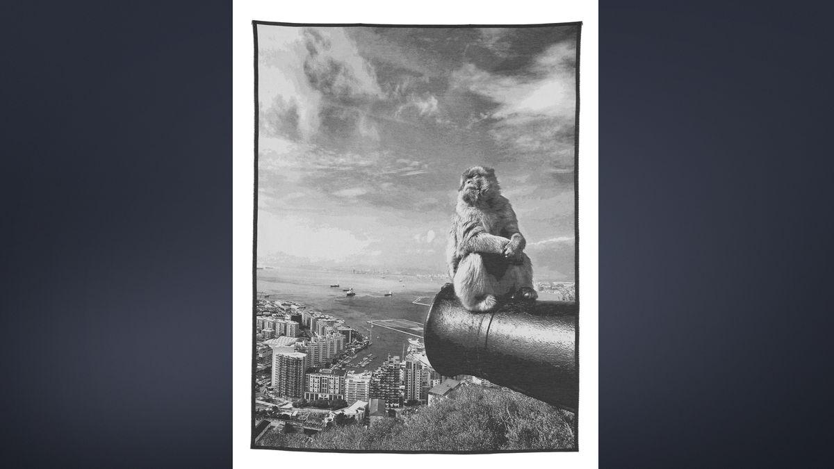 Ein Affe sitzt oberhalb von Gibraltar auf einem Kanonenrohr und blickt gelassen in Richtung Afrika