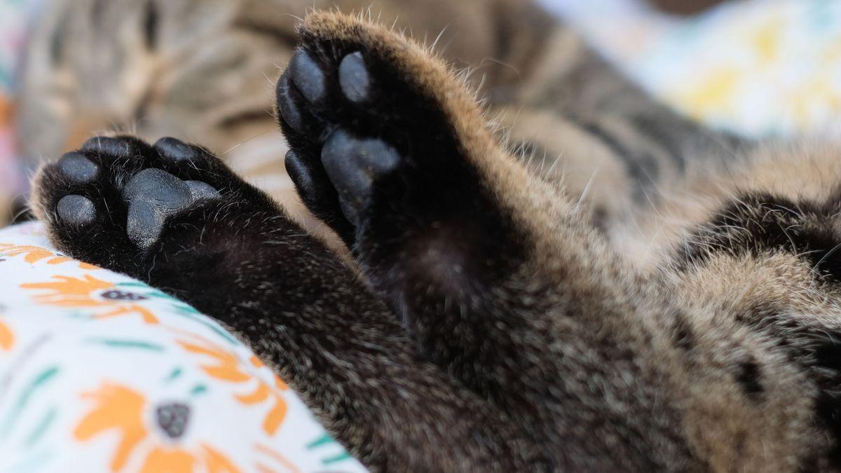 Katzenpfoten (Symbolbild)