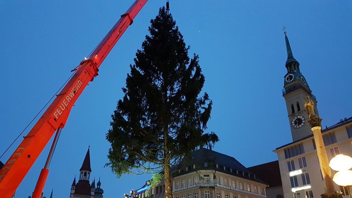 Kran stellt Christbaum 2019 auf dem Marienplatz in München auf