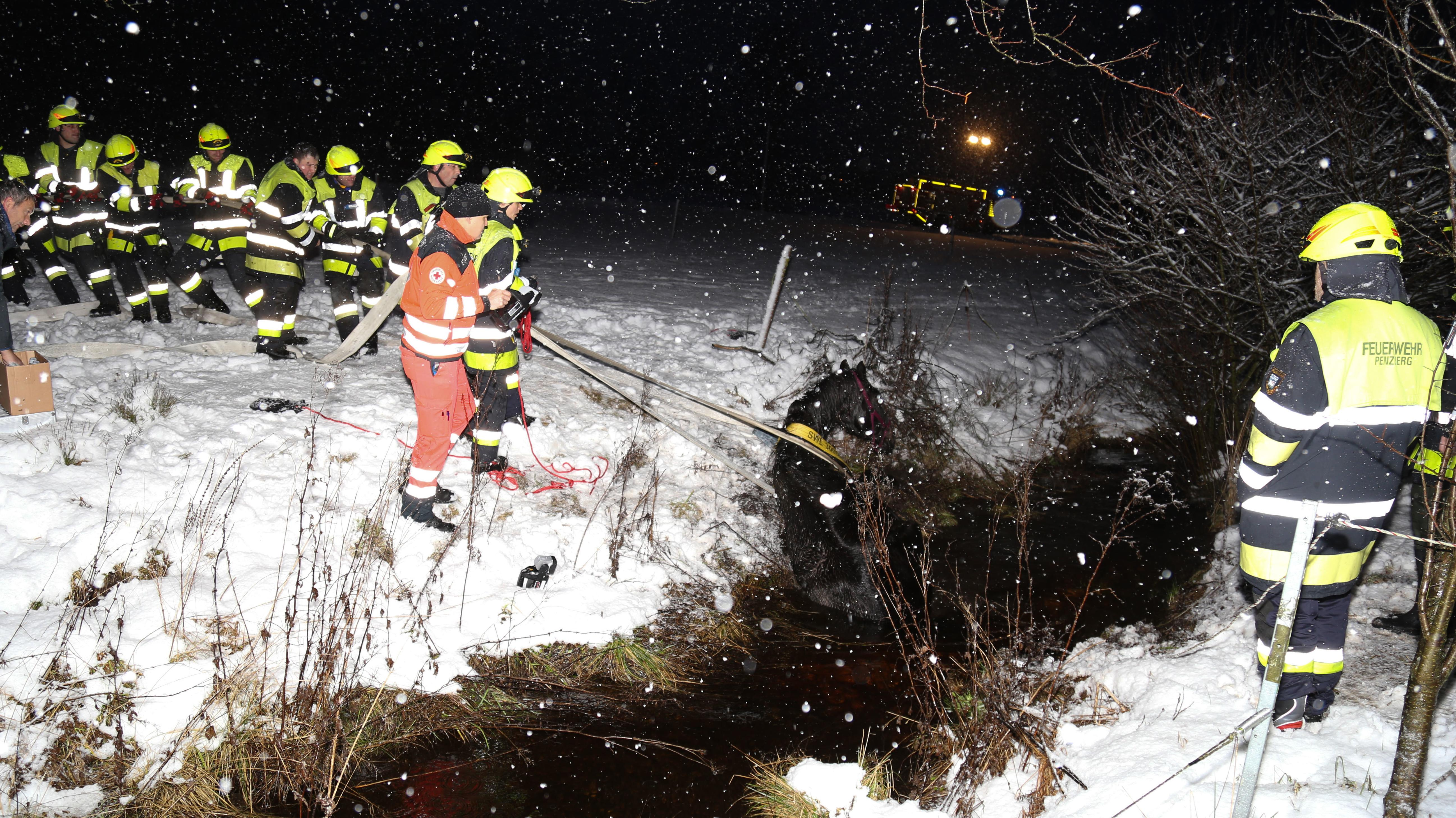 Penzberg im Landkreis Weilheim-Schongau: Pferd aus eiskaltem Wassergraben gerettet