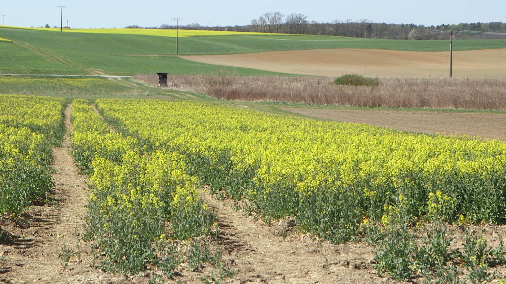 Wochen ohne Regen: Landwirte machen sich Sorgen