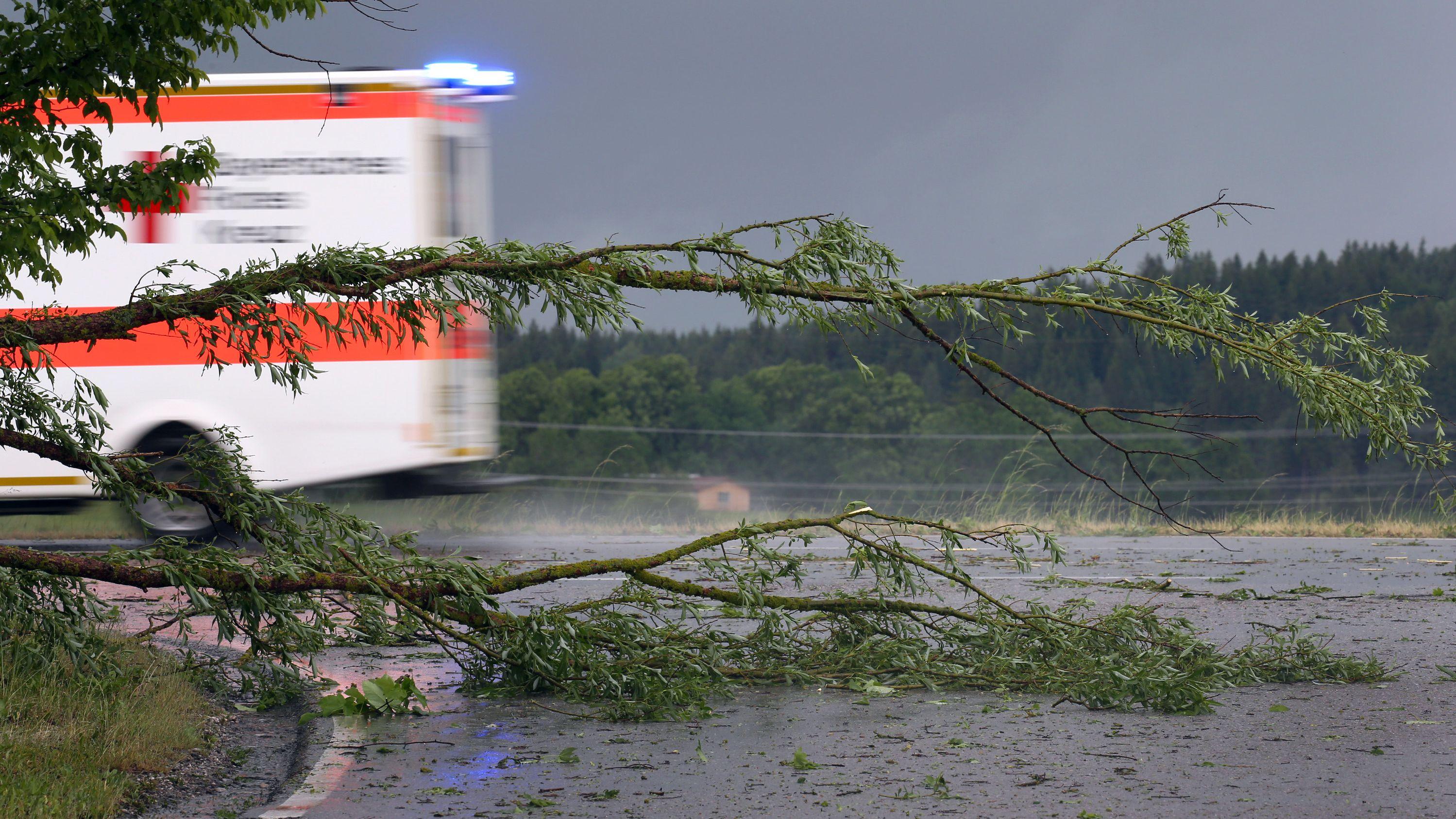 Vom Sturm umgeknickter Baum im Ostallgäu