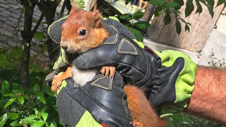 Das gerettete Eichhörnchen wurde in einem Park freigelassen.
