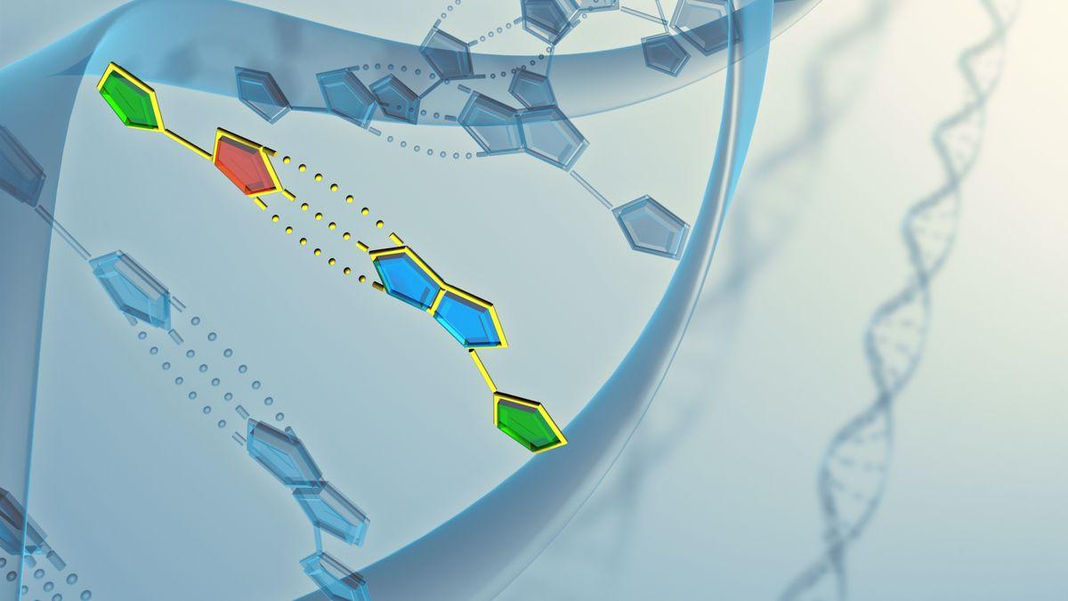 Eine Mutation des ursprünglichen Corona-Virus aus China ist mittlerweile weltweit vorherrschend und könnte ansteckender sein.