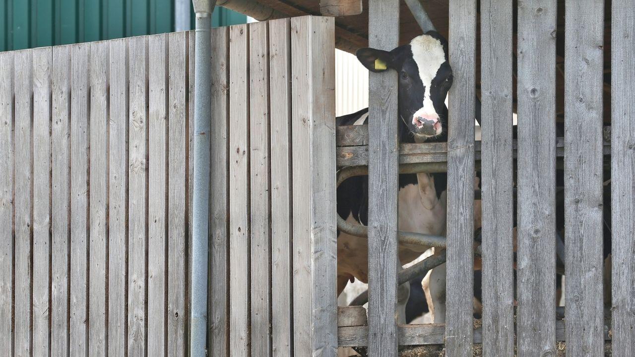 Nach den Tierschutz-Skandalen im Allgäu gab es viele Diskussionen um die Kontrolle landwirtschaftlicher Betriebe.