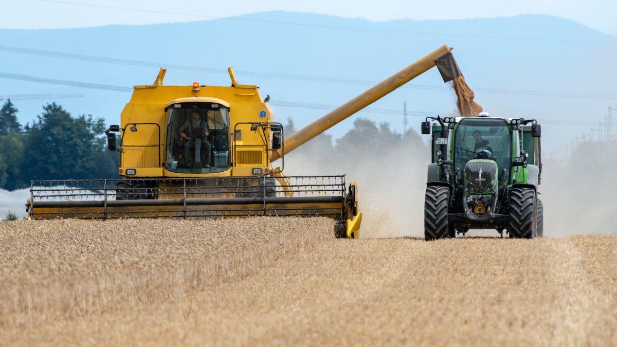 Reifer Weizen wird auf einem Feld mit einem Mähdrescher abgeerntet