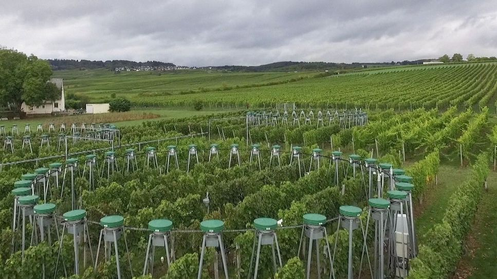 Versuchsfeld mit CO2-Verteilern.
