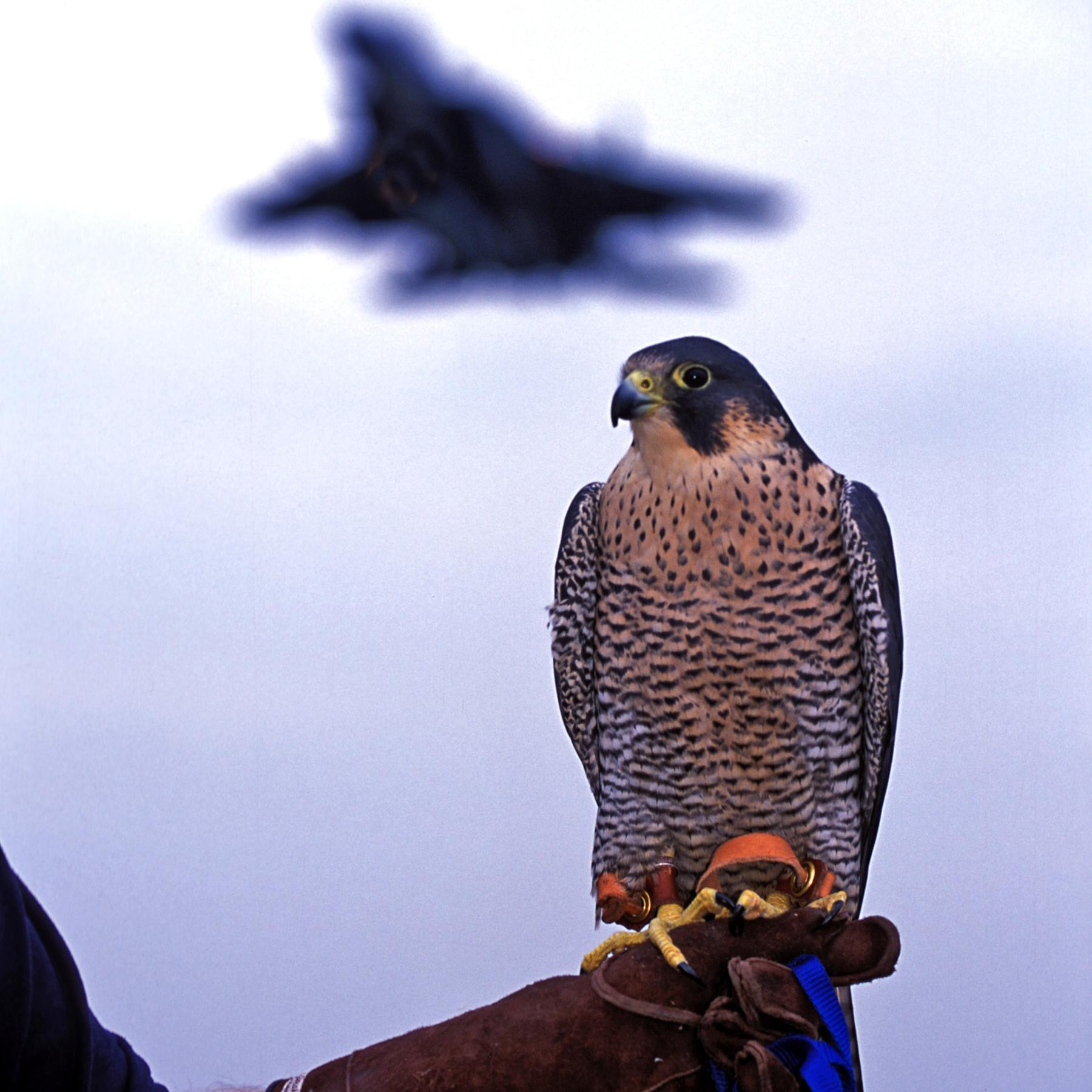 Tiere im Einsatz - Supernasen und Adleraugen