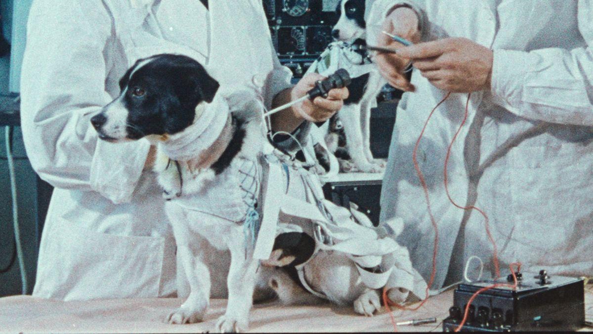 """Ein Raumfahrthund wird auf seine Mission vorbereitet: Szene aus dem Dokumentarfilm """"Space Dogs"""""""