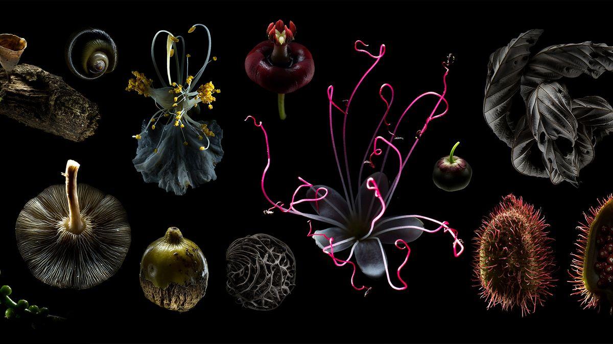 Das Bild zeigt angeleuchtete Pflanzenteile vor schwarzem Hintergrund