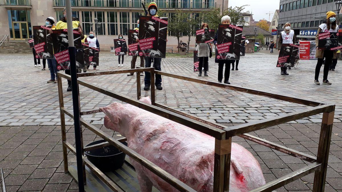 Tierschützer demonstrieren gegen Kastenstände in der Schweinehaltung.
