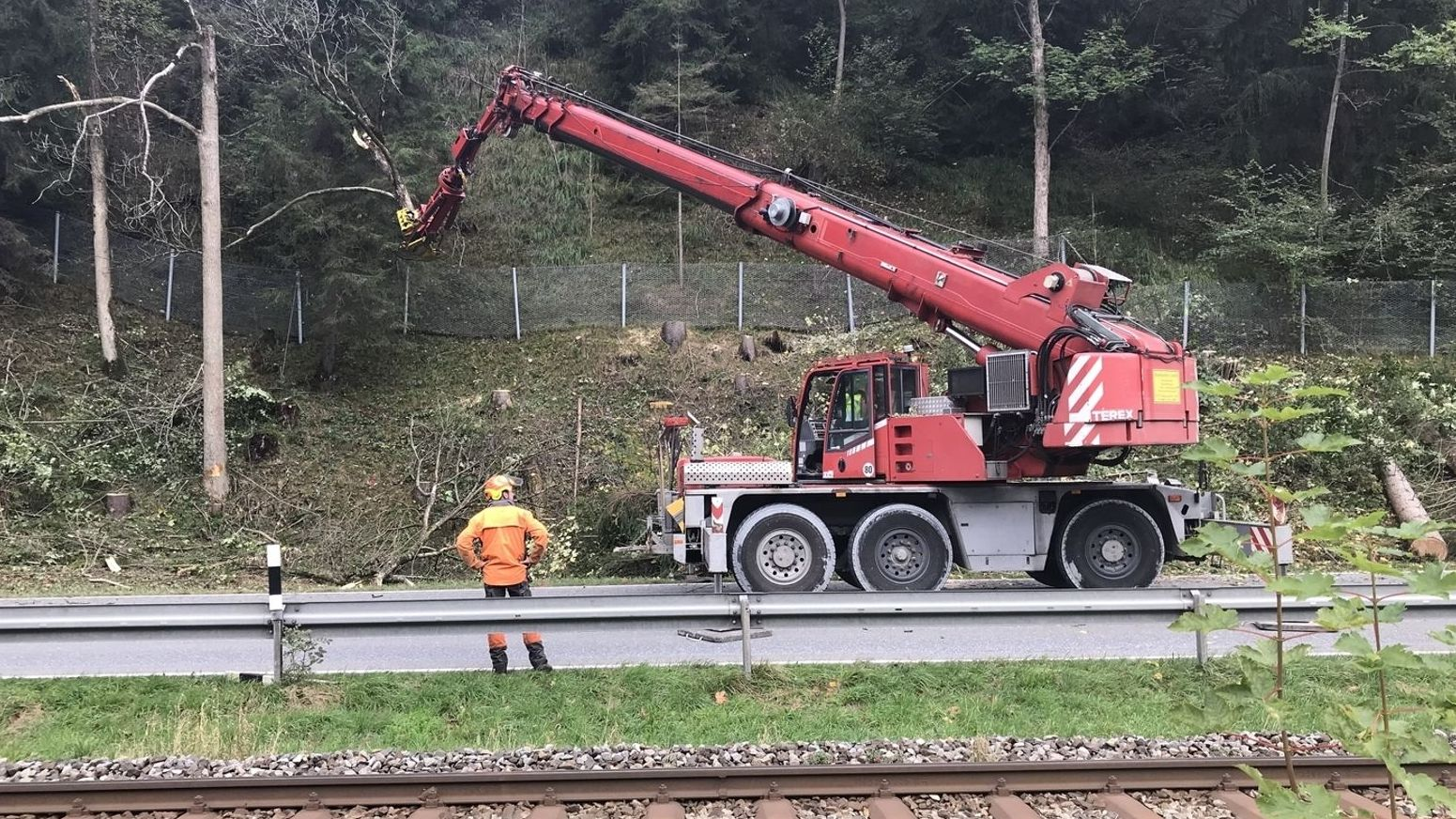 Für den Schutzzaun mussten rund 400 Bäume gefällt werden. (Archivbild)