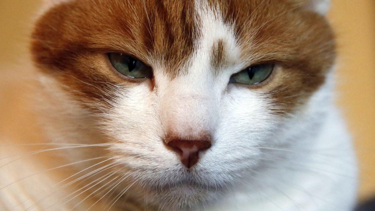 Sonderausstellung über die Kulturgeschichte der Katze