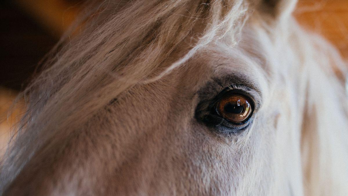 Symbolbild Pferd