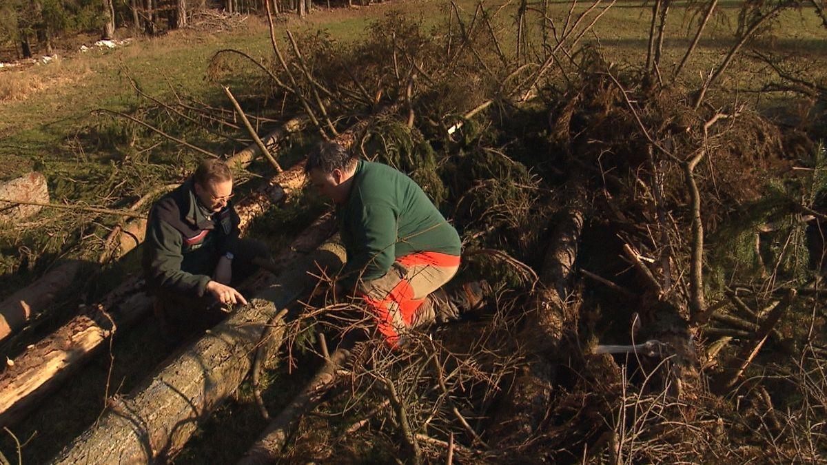 Förster Michael Bug und Waldbesitzer Thomas Kraus sehen sich Waldbäume genau an