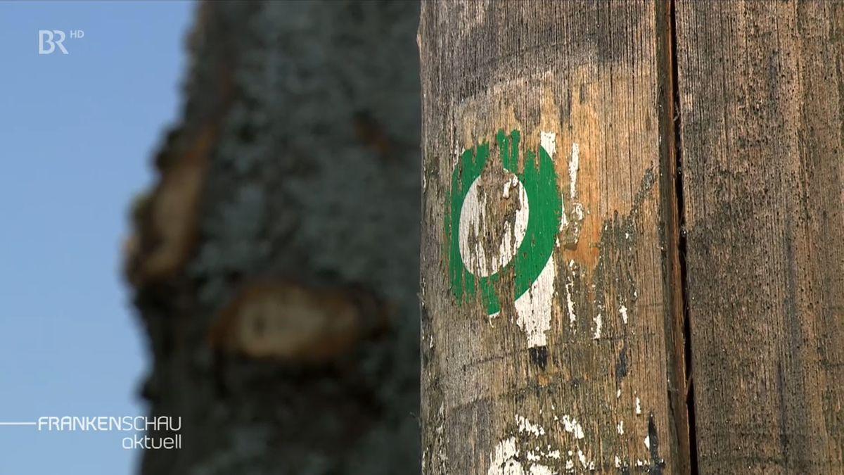 Auf einem abgestorbenen Baum ohne Rinde ist ein grüner Kreis zu sehen, der auf einen Wanderweg hinweist.
