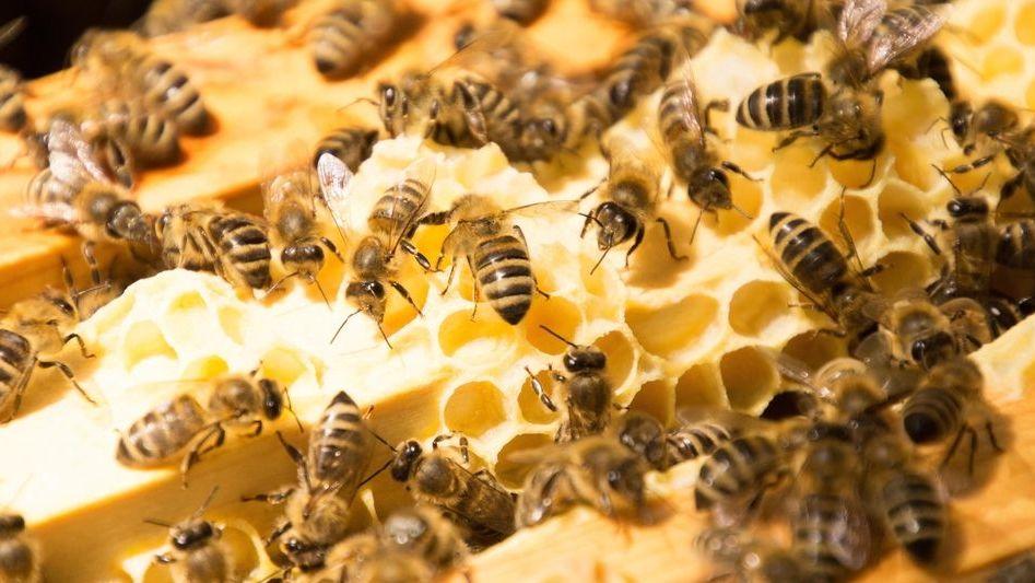 Bienen im Bienenstock (Symbolbild)