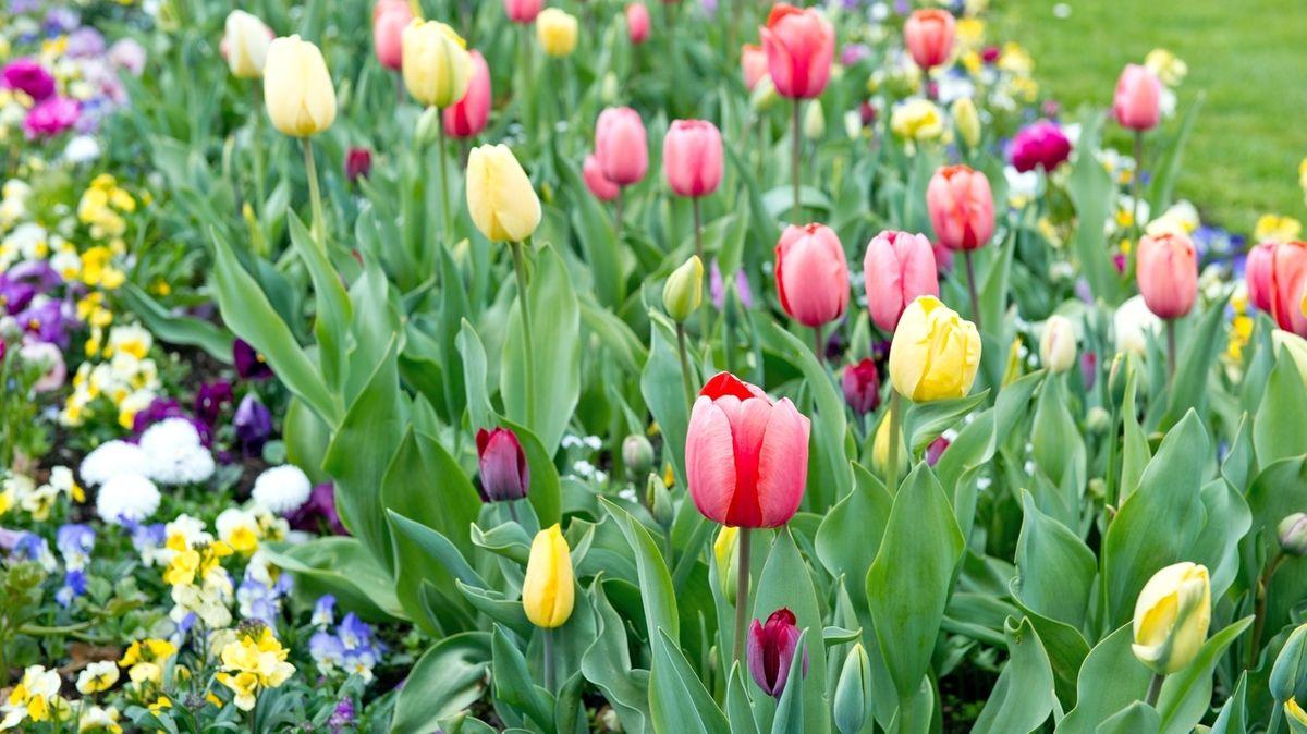 Symbolbild: Gartenschau