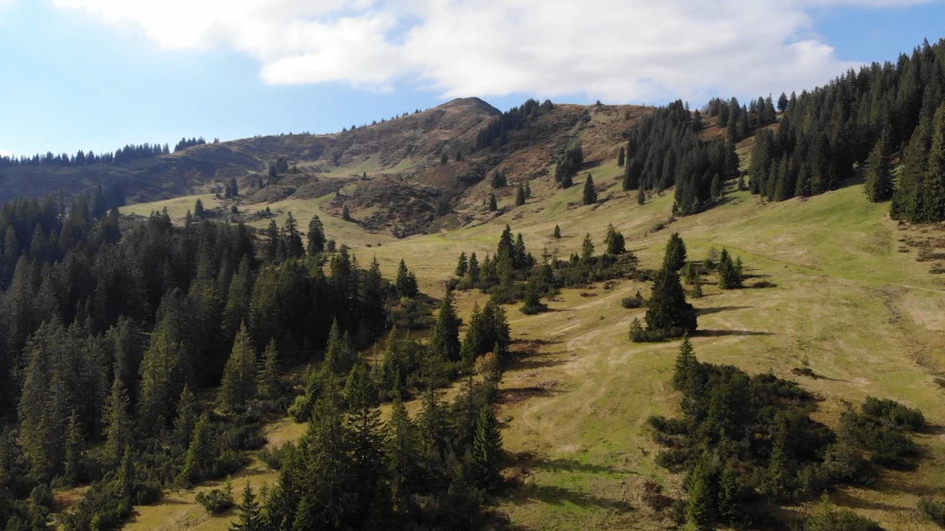 Berggebiet am Riedberger Horn - zum Teil mit Nadelbäumen, zum Teil mit Wiesen und Büschen bewachsen