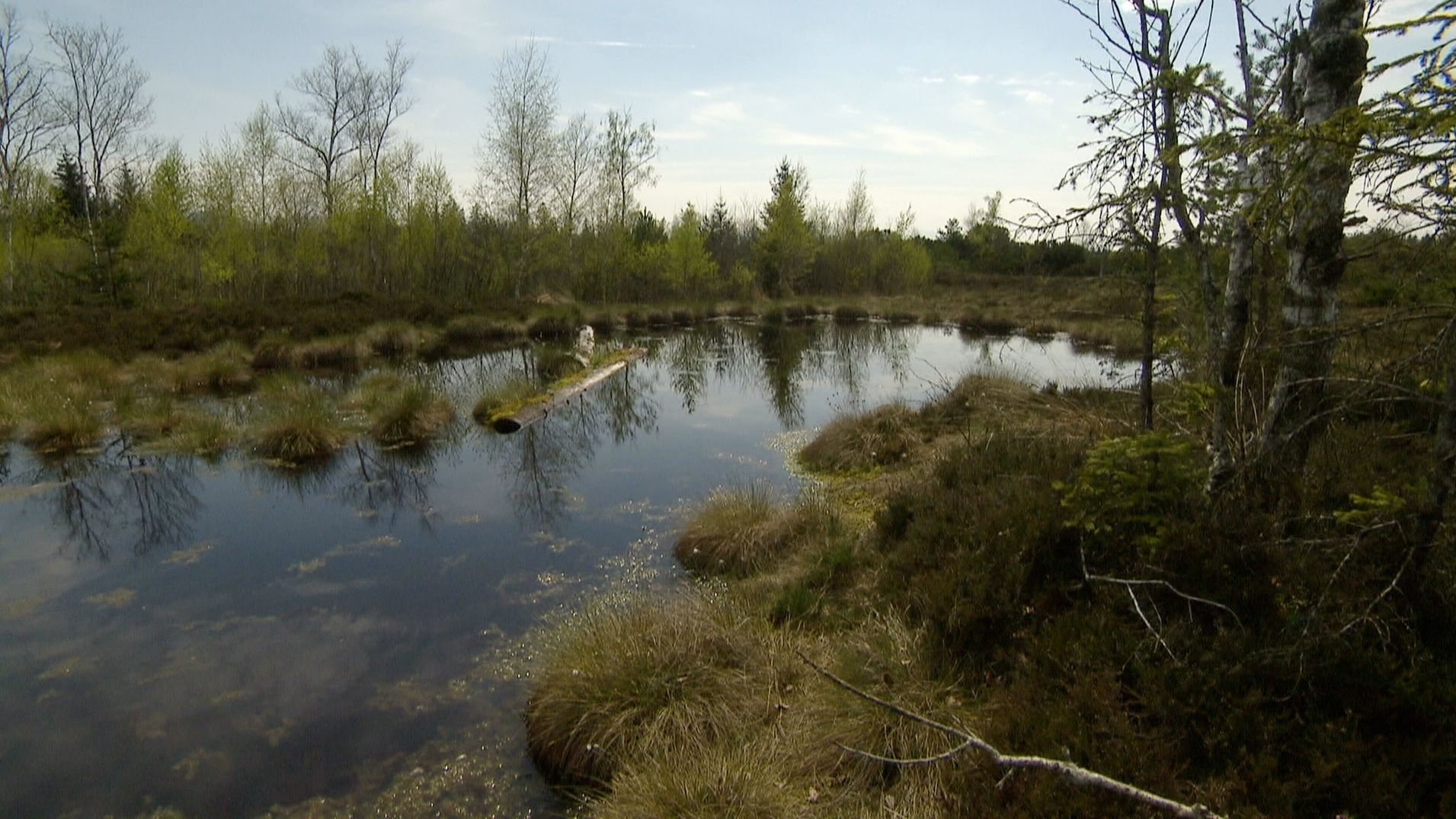 Naturschutzgebiet Wenger Moor im Salzburger Land
