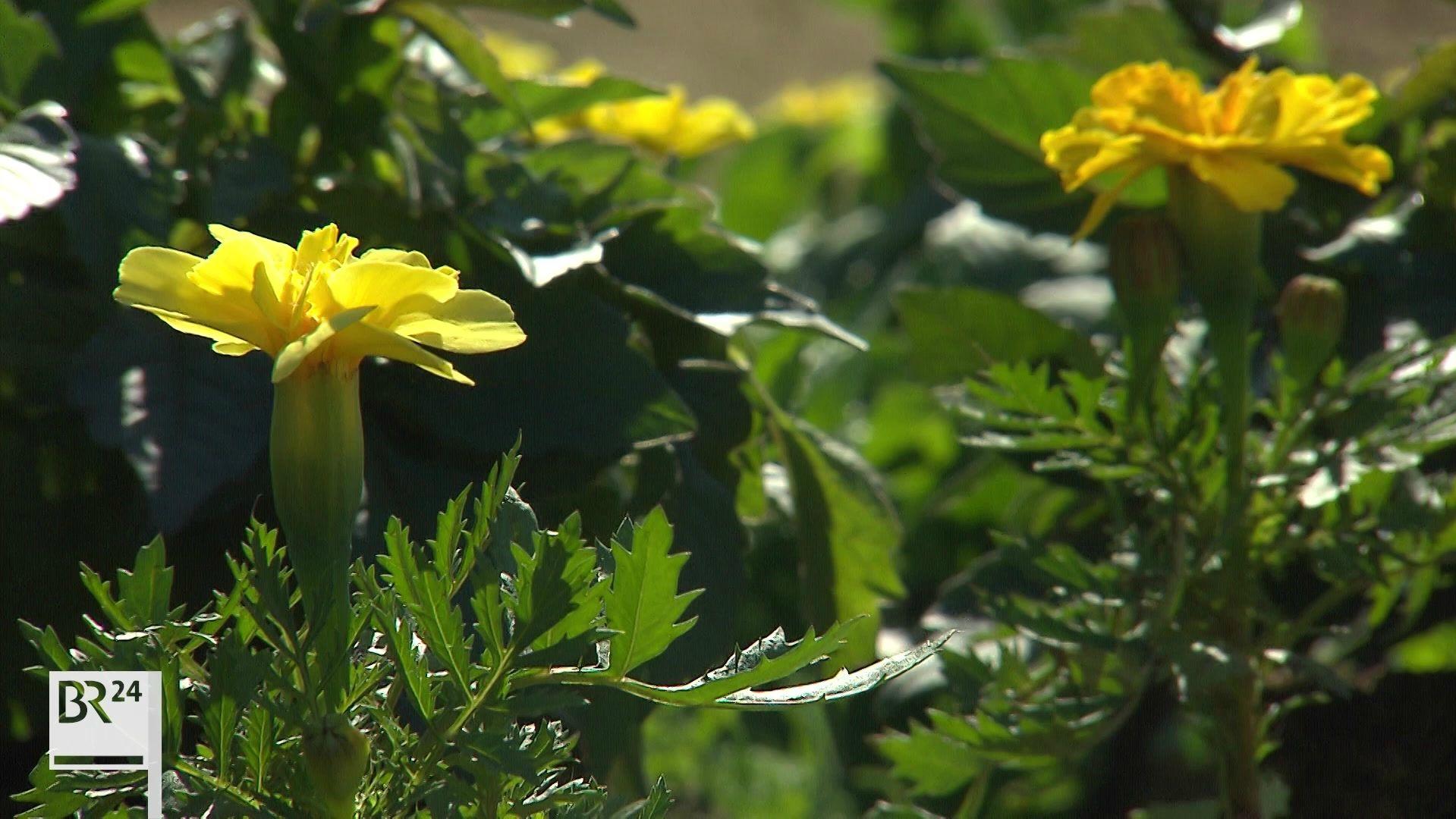 Blütenzauber in Wassertrüdingen