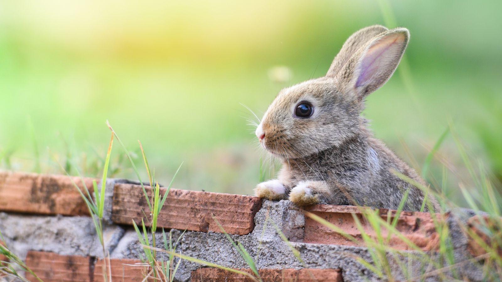 Kaninchen Sterben 2021