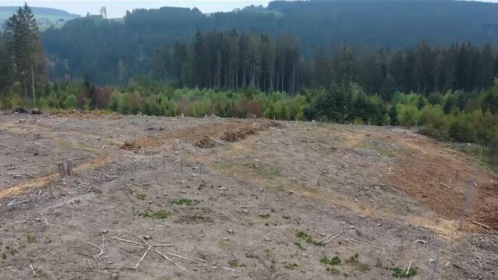 Eine Fläche im Frankenwald auf der alle Bäume gefällt wurden.