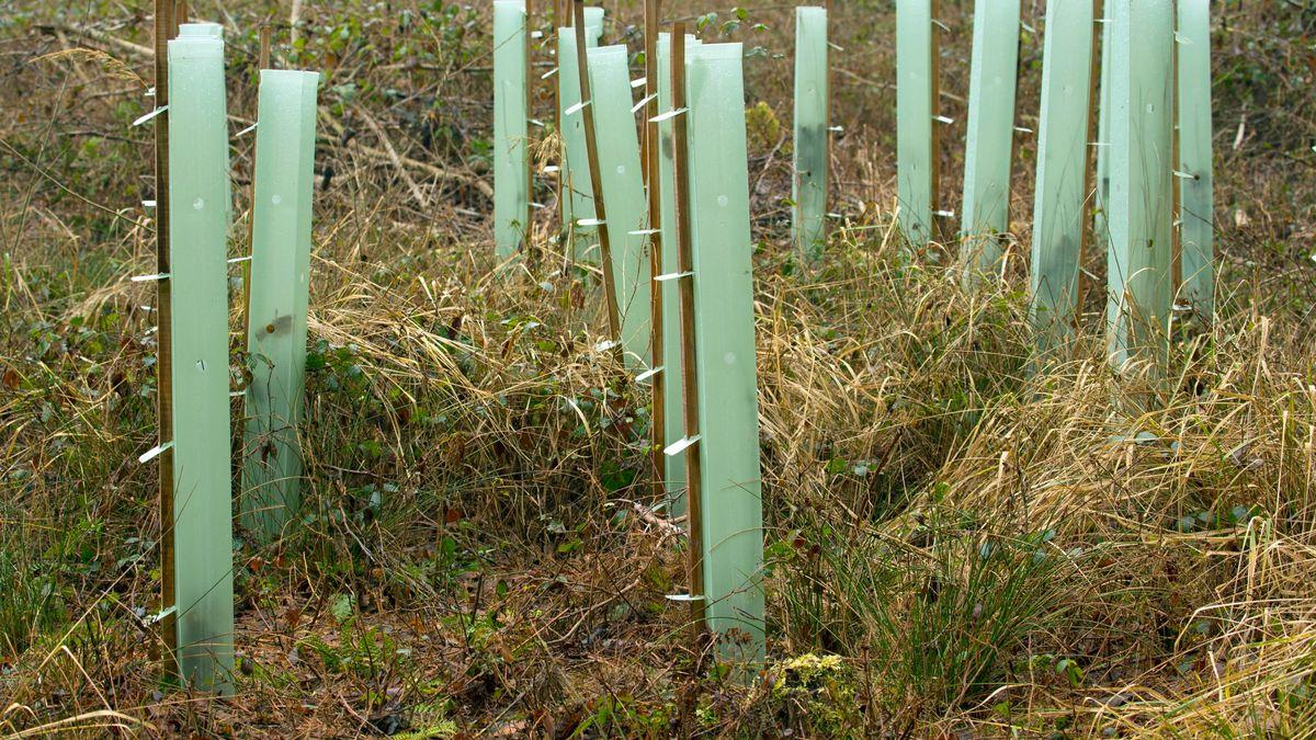 Kunststoffröhren als Schutz vor Wildverbiss bei Anpflanzungen von Bäumen