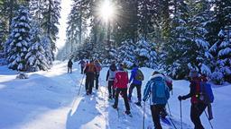 Schneeschuhwanderer laufen einen Waldweg entlang  | Bild:Tourismus GmbH Ochsenkopf