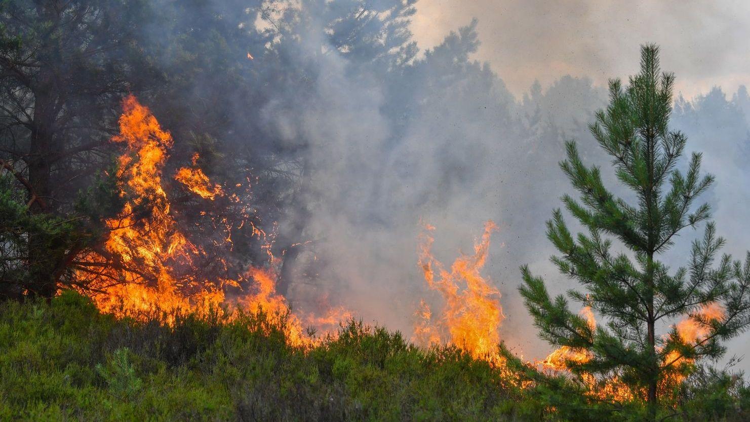 Die Waldbrandgefahr in Mittelfranken ist sehr hoch.