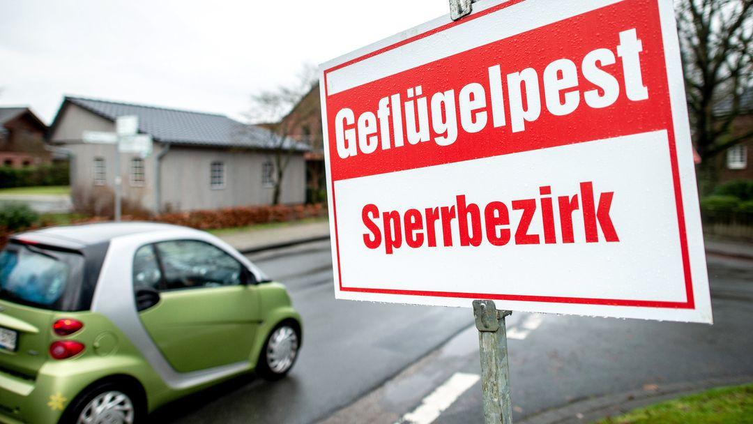 """Ein Schild mit der Aufschrift """"Geflügelpest Sperrbezirk"""" steht an einer Straße."""