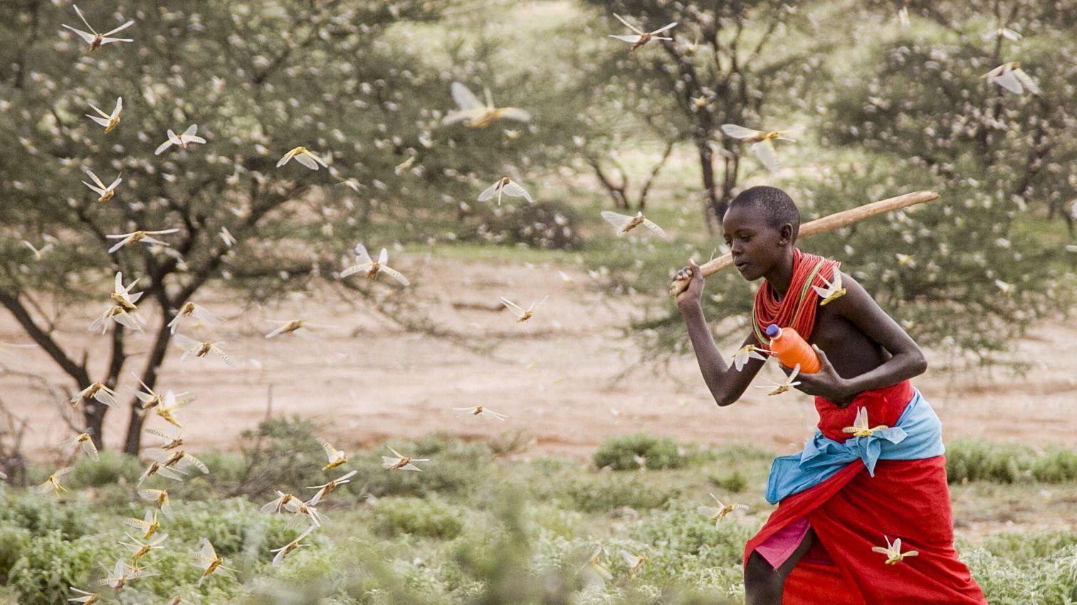 Kenia: Ein Junge versucht mit einem Stock Heuschrecken zu erschlagen, die überall in der Luft herum fliegen.