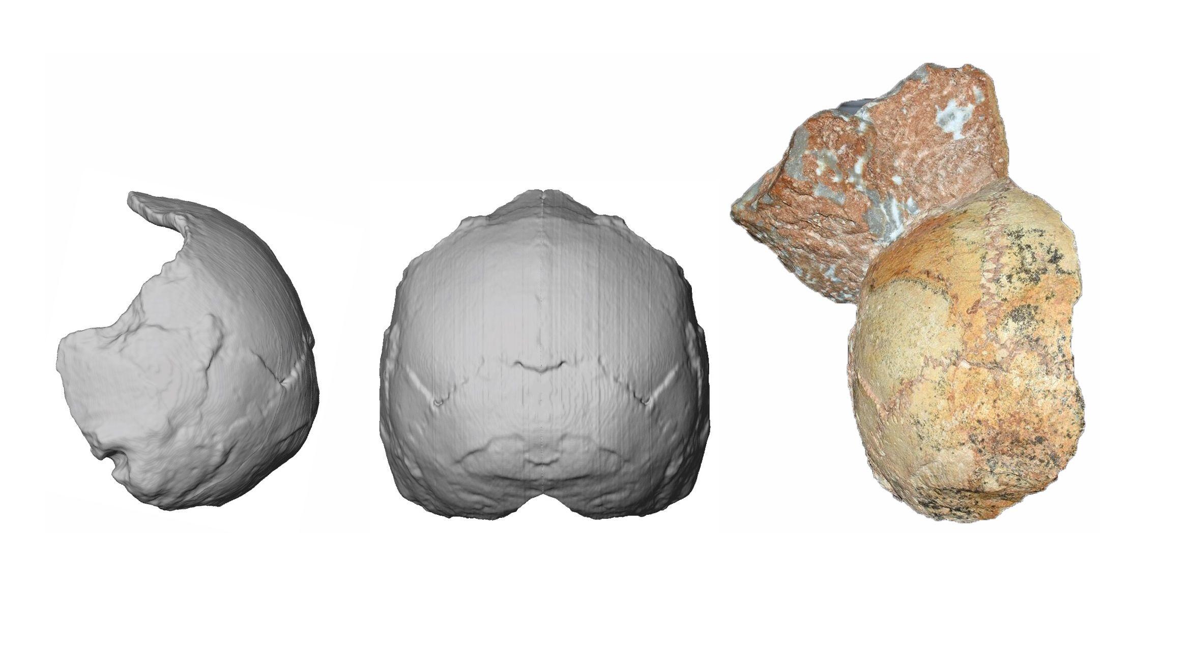 Rekonstruktion des Apidima 1-Schädels, der in Griechenland gefunden wurde.