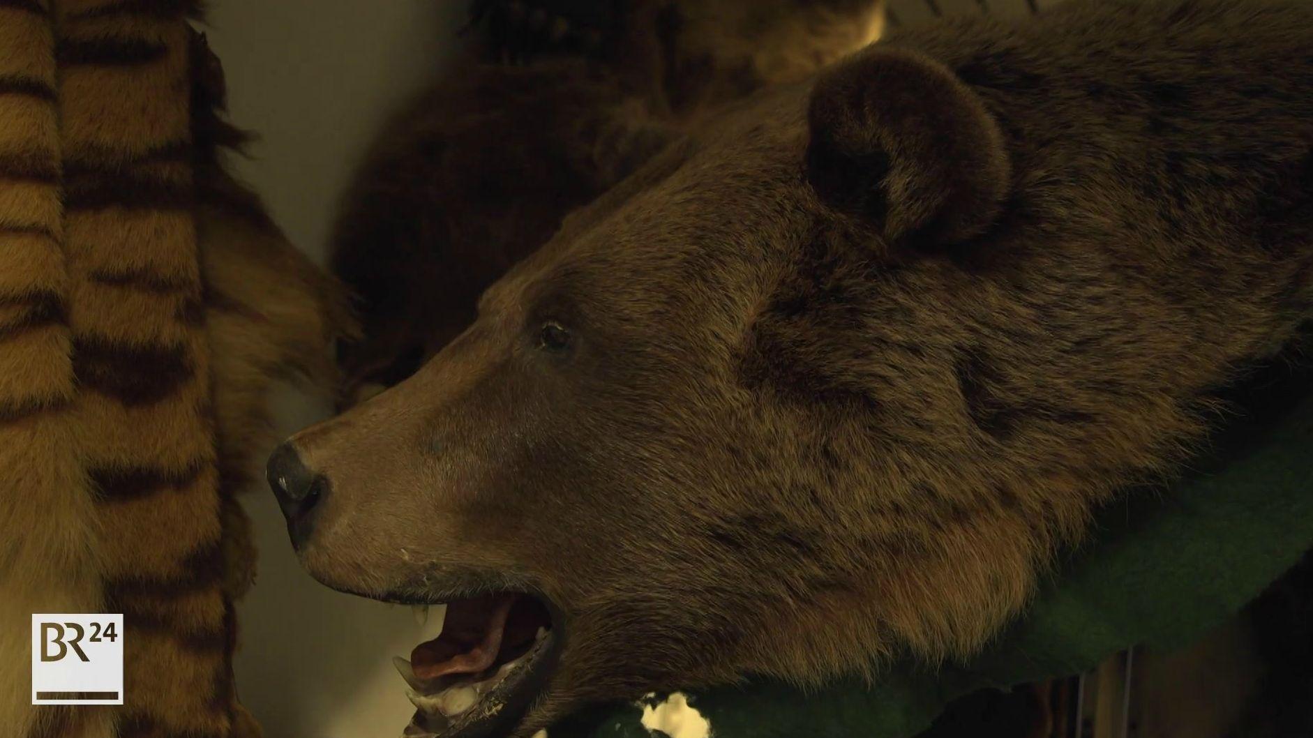 Ausgestopfter Bär