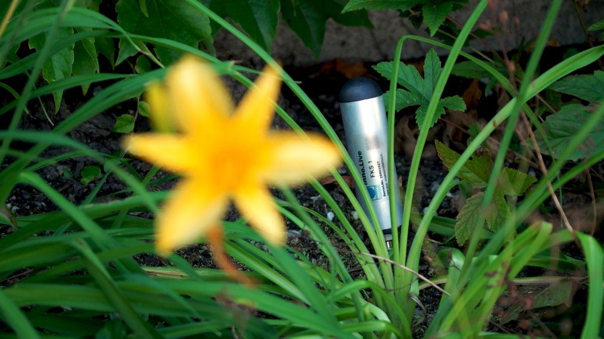 Sensor in einem Blumenbeet in Stadtbergen.
