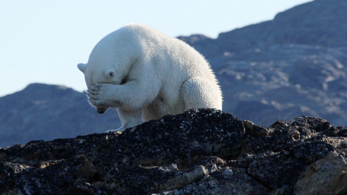 Eisbär in der Baffin-Bucht, Kanada.