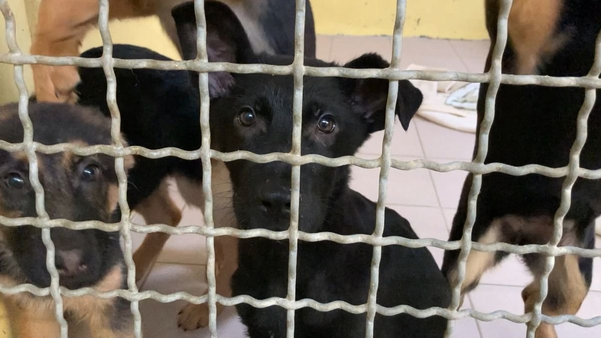Streit um 100 geschmuggelte Hundewelpen beschäftigt Gericht