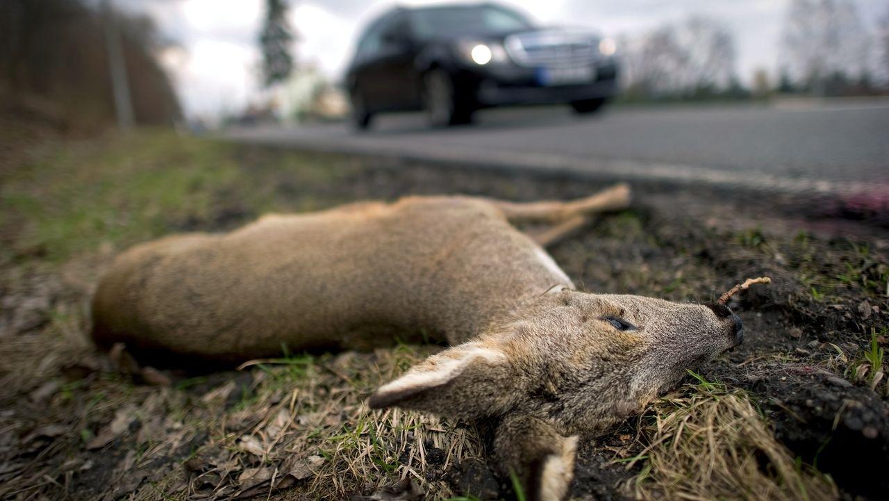 Warum in Bayern immer mehr Wildunfälle passieren
